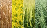 Rośliny zalecane do uprawy